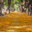 Pathway with yellow flowers — Stock Photo