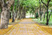 Cesta na park — Stock fotografie