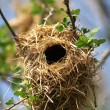 Bird's nest — Stock Photo