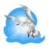 Seagull — Stock Vector