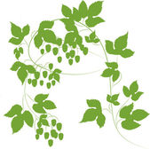 Branches with cones of hops — Stock Vector