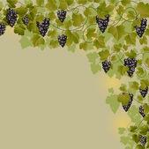 Vine — ストックベクタ