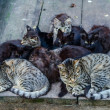 Stray cats family — Stock Photo #31368125