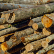 Logs — Stock Photo #34223357
