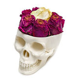 Roses into an human skull — Stock Photo