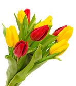 Bouquet of tulips isolated — Stock Photo
