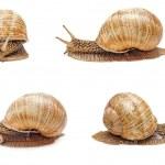 Snail isolated — Stock Photo #48214873