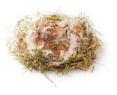 Empty nest — Stock Photo