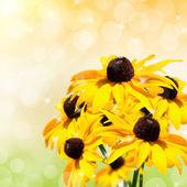Yellow beautiful flower — Stock Photo