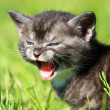 Scared kitten - Stock Photo