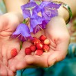 Handful of wild strawberries — ストック写真