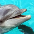 Happy smiling dolphin — Stock Photo
