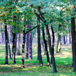 Park with lots of trees — Stock Photo