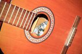 Cat inside guitar — Stock Photo