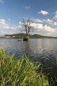 Arid tree in lake — Stock Photo