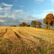 Stubble field — Stock Photo