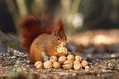 Squirrel in paradise — Stockfoto
