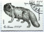 Stamp with polar fox — Stock Photo