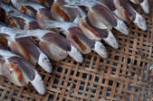 Fish in kradang — Stock Photo