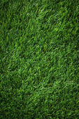 Texture of fresh green grass in sunny day — Stock Photo