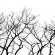 Silhouettes of trees — Stock Photo