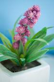 Mini flowers — Stock Photo
