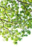 árbol aislado — Foto de Stock