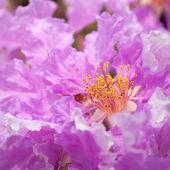Jagodlin kwiat — Zdjęcie stockowe