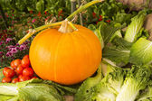 Pumpkin with tomato and cabbage — Stock Photo