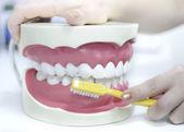 Soins des dents — Photo