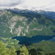 Vogel,Bohinj — Stock Photo
