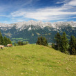 Wilder Kaiser — Stock Photo