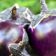 Round eggplants — Stock Photo #27082387