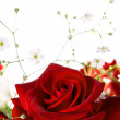 Red rose on the white background — Stock Photo #27322759
