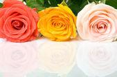πολύχρωμα τριαντάφυλλα στην ανακλώσα επιφάνεια — Φωτογραφία Αρχείου