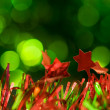 Christmas unfocused holiday background — Stock Photo