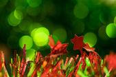 Vánoční rozostřený dovolená pozadí — Stock fotografie