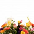 Variety of flowers — Stock Photo