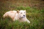 African beauty — Stockfoto