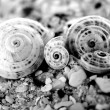 Four shells — Foto de Stock