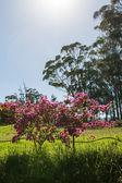 Pink flowers — Stok fotoğraf