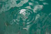 Peixe na água. — Fotografia Stock