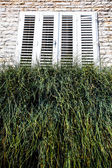 Grass on the windowsill — Stock Photo