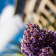 Purple plant — Stockfoto #32144737