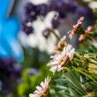 Stockfoto: Flowers in garden