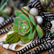 Fat plant and pearls — Stockfoto