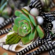 Fat plant and pearls — Foto de Stock