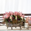 Proteas in silver — Stock Photo