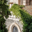 Churches rooftop with tendrils growing thickly — Stockfoto