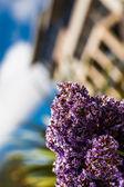 Purple plant — Stock Photo